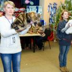 Выставка Январь 2016, Клуб любителей кошек «Баст»