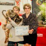 Выставка Март 2016, Фелинологический клуб «Union Cats»