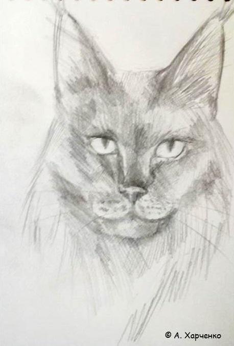 коты Харченко