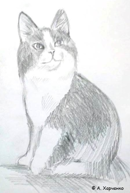 коты Харченко2
